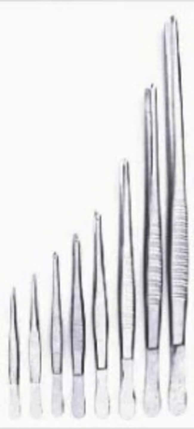 Schneider Gerd™ Stainless Steel Laboratory Forceps Tip Style: Blunt point; Length: 300mm Schneider Gerd™ Stainless Steel Laboratory Forceps
