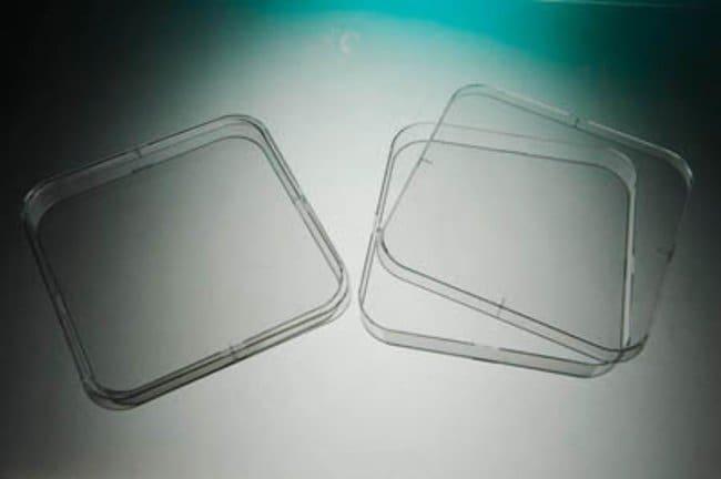 Gosselin™ quadratische Petrischale Steril Gosselin™ quadratische Petrischale