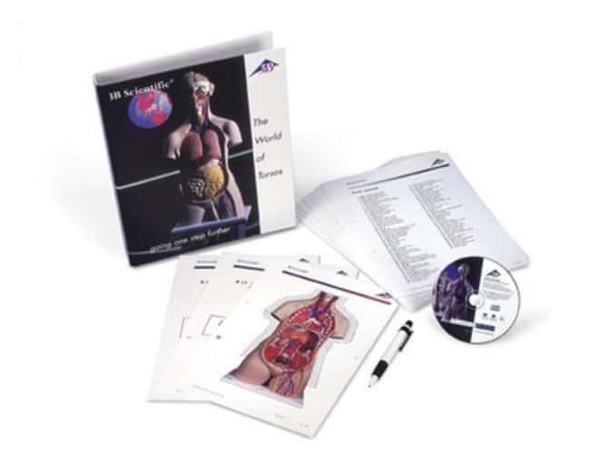 3B Scientific™ Torso guide pictures  Products