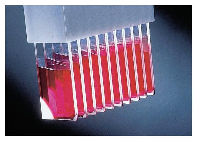 Fisherbrand ProbeOn and ProbeOn Plus Slides  Gray tab:Microscopes, Slides