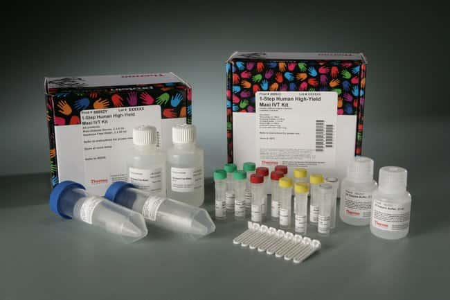 Thermo Scientific 1-Step Human High-Yield Maxi IVT Kit :Life Sciences:Protein