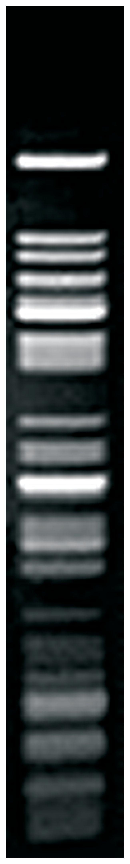 Thermo Scientific TaqI (10 U/L):Life Sciences:Enzymes and Inhibitors