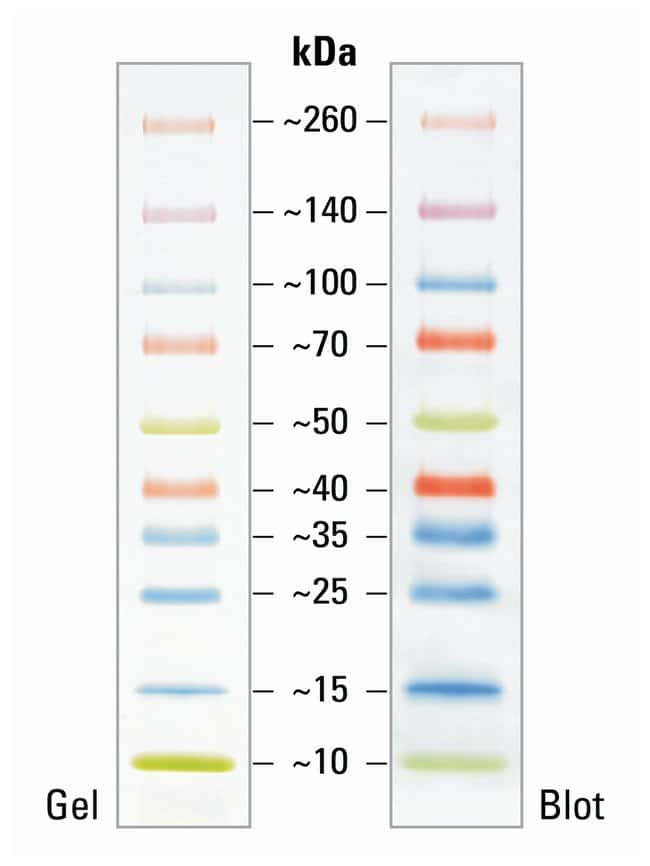 Thermo Scientific Spectra Multicolor Broad Range Protein