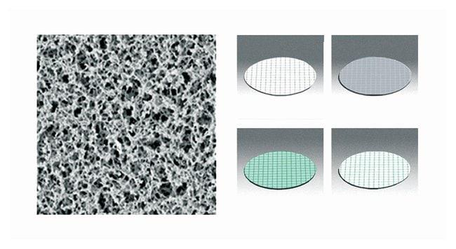 Sartorius™Gridded Nonsterile Cellulose Nitrate Membrane Filters: 0.65μm Pore Size
