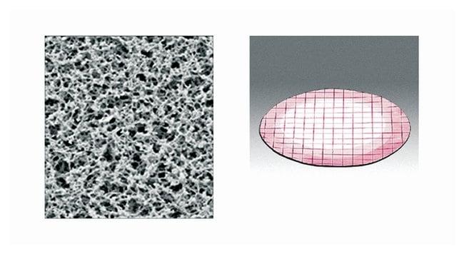 Sartorius™Hydrophobic Edged Nonsterile Cellulose Nitrate and Acetate Membrane Filters