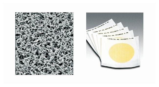 Sartorius™Gridded Sterile Cellulose Nitrate Membrane Filters: 0.2μm Pore size: 0.2μm; Dia.: 50mm; w/Black grid; White; 100/Pk. Sartorius™Gridded Sterile Cellulose Nitrate Membrane Filters: 0.2μm