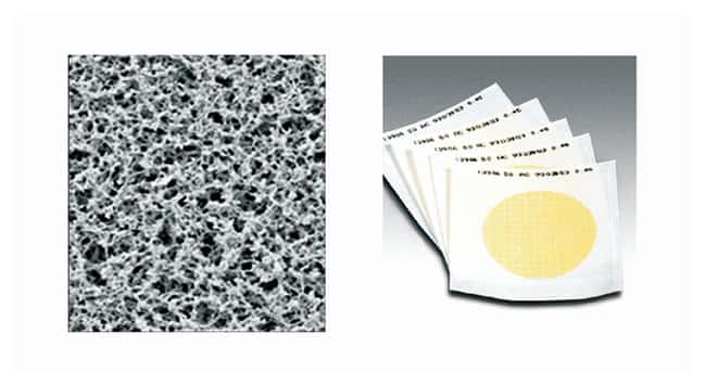 Sartorius™Gridded Sterile Cellulose Nitrate Membrane Filters: 0.8μm