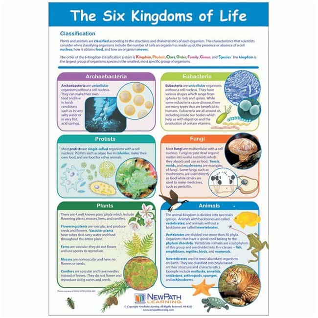 The Six Kingdoms of Life Poster  Each:Teaching Supplies