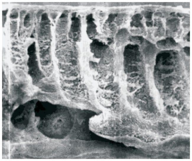 Sartorius™Ultrafiltration Membrane Discs