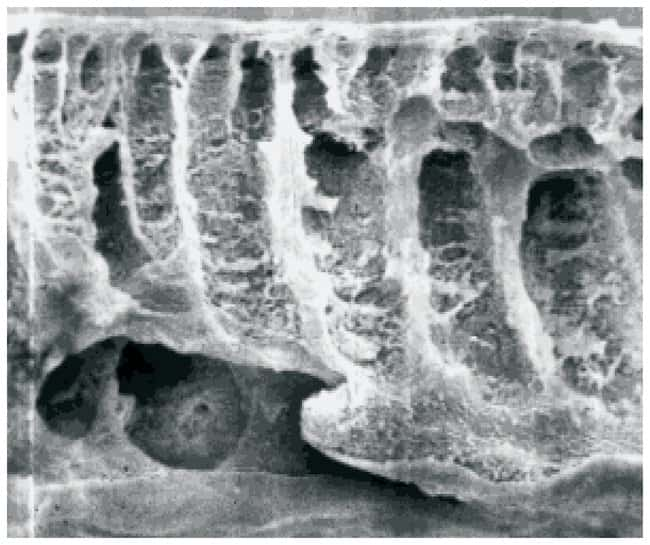 SartoriusUltrafiltration Membrane Discs PES; Dia.: 47mm; 30,000 MWCO; 10/Pk. SartoriusUltrafiltration Membrane Discs