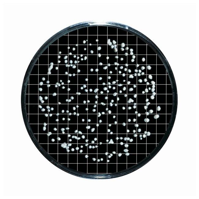 Sartorius™Nutrient Pad Sets (NPS) 47mm diameter NPS type: Lysine; Pore Size: 0.65μm Sartorius™Nutrient Pad Sets (NPS) 47mm diameter