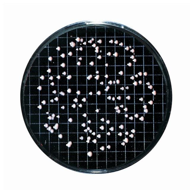 Sartorius Nutrient Pad Sets (NPS) 47mm diameter NPS type: Bismuth Sulfite