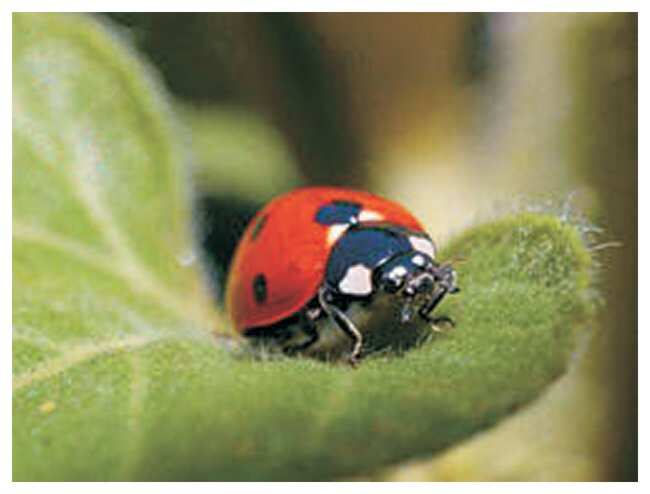 Nasco Insects :Teaching Supplies:Biology Classroom