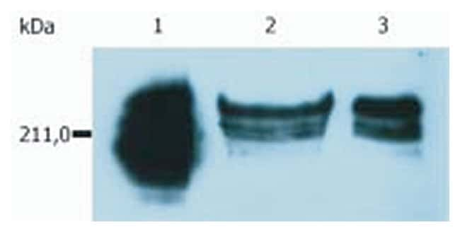 CD45RA Mouse anti-Human, APC, Clone: MEM-56, Invitrogen 100 tests; APC