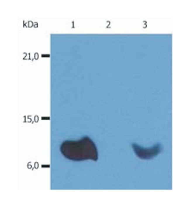beta-2 Microglobulin Mouse anti-Human, HRP, Clone: B2M-01, Invitrogen 100