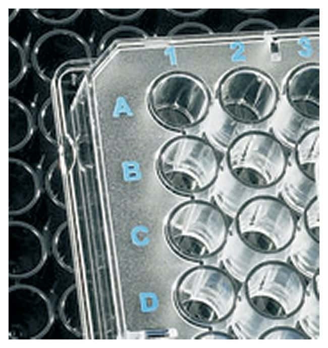 BRAND&trade;&nbsp;BRAND<i>plates</i> hydroGrade&trade; 96-Well Microplates Transparent; U-bottom; 330&mu;L Products