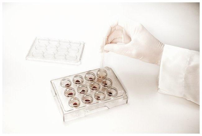 Bel-Art™SP Scienceware™ 12Well-Gewebespalter und doppelseitiger Pistill: Spatel, Pinzetten und Utensilien Produkte