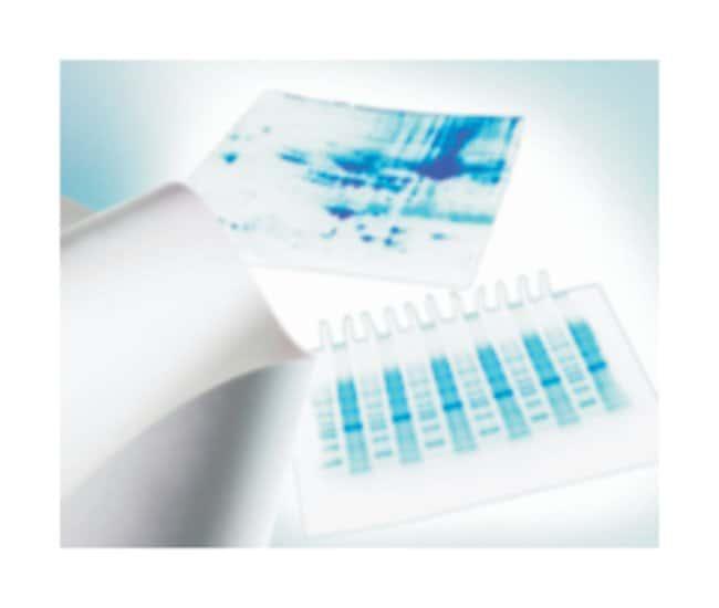 Merck MilliporeMembranas de transferencia de PVDF Immobilon™-P Immobilon P; Dimensions: 8 x 10cm; Sheets; Pore size: 0.45μm Merck MilliporeMembranas de transferencia de PVDF Immobilon™-P