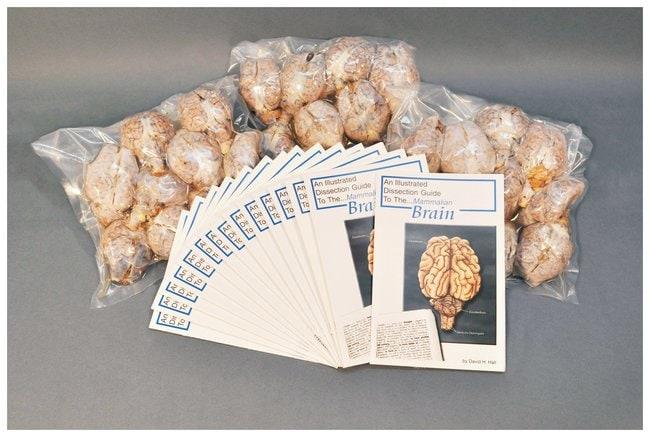 Fisher Science Education Economy Class Packs: Mammalian Organs :Teaching