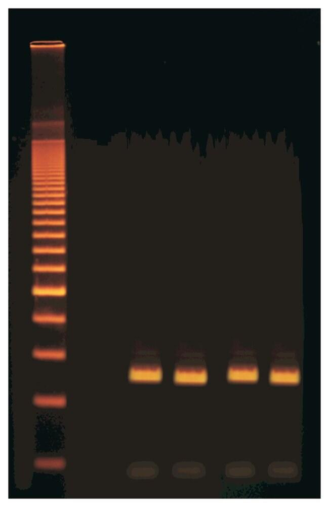 EdvotekQuick PCR Quick PCR:Education Supplies