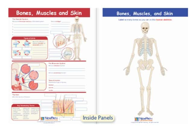 Newpath Learning Bones Muscles And Skin Visual Learning Guide Bones