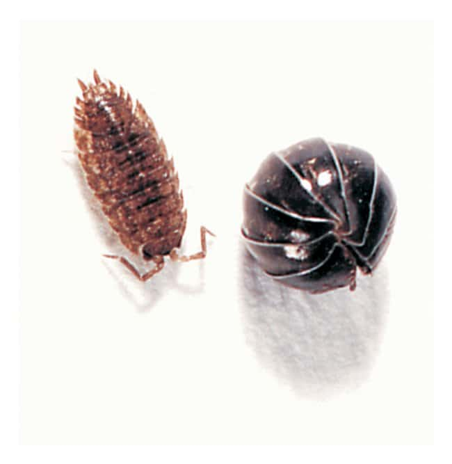 Carolina Terrestrial Isopods :Teaching Supplies:Biology Classroom