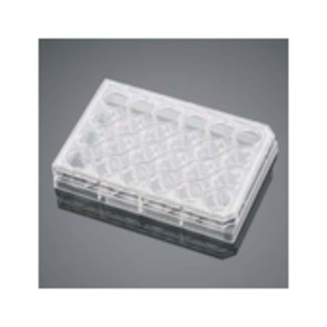 Corning™BioCoat™ Collagen IV Multiwell Plate Insert: Cell Dividers, Inserts, Scrapers and Utensils Cell Culture
