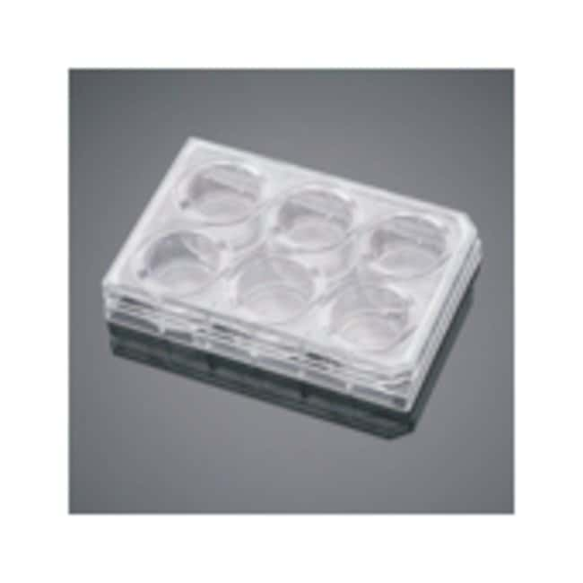 Corning™ BioCoat™ Collagen IV Multiwell Plate Insert 6-well Corning™ BioCoat™ Collagen IV Multiwell Plate Insert