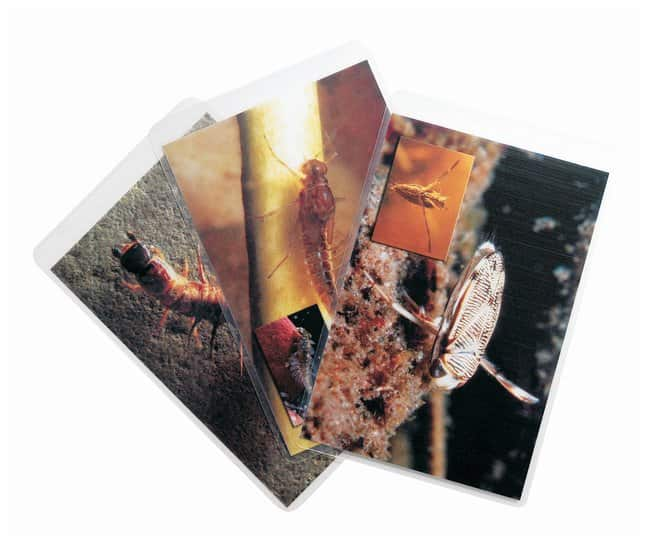 LaMotte™ Insect Identification Flashcards <img src=