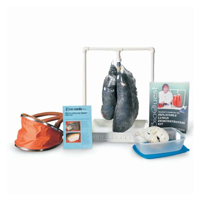 Smokers Lungs Kit :Teaching Supplies:Biology Classroom