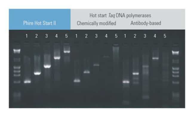 Thermo Scientific™ Phire Green Hot Start II PCR Master Mix