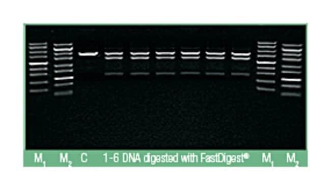 Thermo Scientific™Reactivos para kit de minipreparación de plásmidos GeneJET™: Productos bioquímicos y reactivos Ciencias de la vida