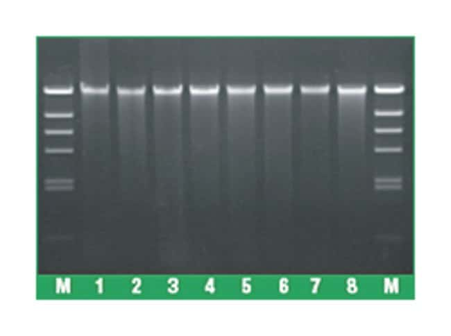 Thermo Scientific™ GeneJET FFPE DNA Purification Kit