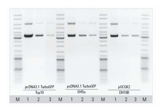 Thermo Scientific™ MagJET Plasmid DNA Kit: Biochemicals and Reagents Life Sciences