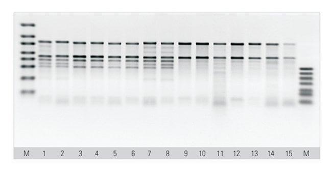 Thermo Scientific™MagJET™ Plant RNA Kit For 4 x 96 preparations Thermo Scientific™MagJET™ Plant RNA Kit