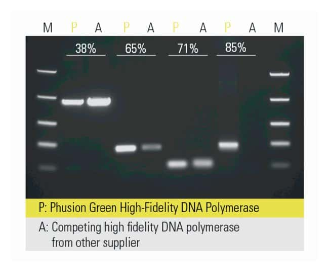 Thermo Scientific™ Phusion Green High-Fidelity DNA Polymerase (2 U/µL)