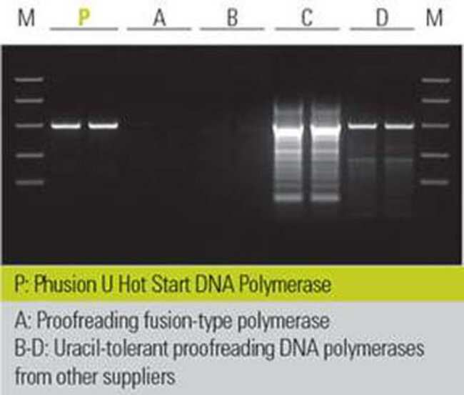 Thermo Scientific Phusion U Hot Start DNA Polymerase PROMO:Life Sciences:PCR