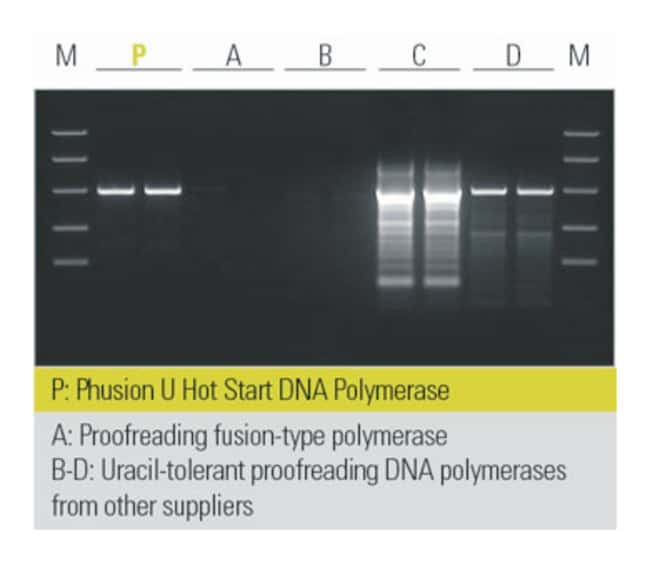 Thermo Scientific™ Phusion™ U Green Hot Start DNA Polymerase 500 Units Thermo Scientific™ Phusion™ U Green Hot Start DNA Polymerase