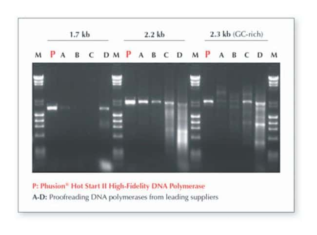 Thermo Scientific™Phusion Green Hot Start II High-Fidelity PCR Master Mix