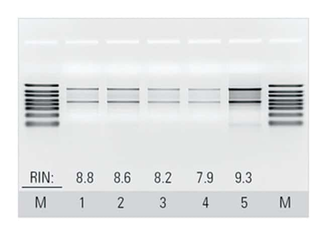 Thermo Scientific™ Buffers for GeneJET™ Blood RNA Kit: Biochemicals and Reagents Life Sciences