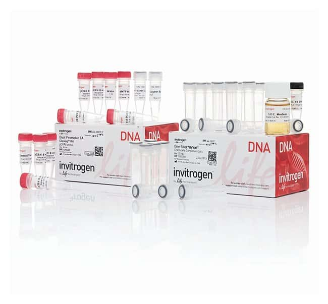 Invitrogen™ TA Cloning™ Kits, Dual Promoter with pCR™ 2.1 Vector and One Shot™ Chemically Competent Cells 20 reactions Products
