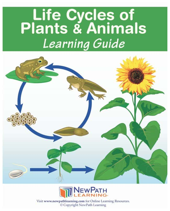 NewPath LearningLife Cycles of Plants and Animals Learning Guide:Education
