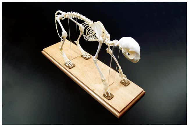 Animal Skeletons :Teaching Supplies:STEM and Career Education