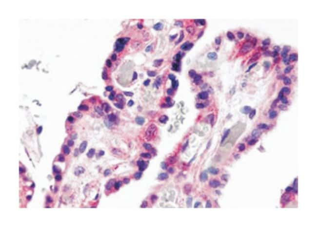 GPR78 Rabbit anti-Human, Polyclonal Antibody, Abnova 50µg; Unlabeled:Life