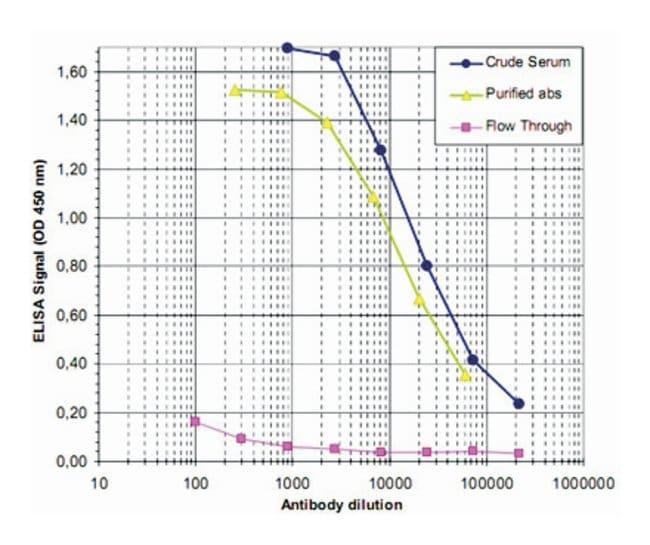 MBD1 Rabbit anti-Human, Polyclonal Antibody, Abnova 50µg; Unlabeled