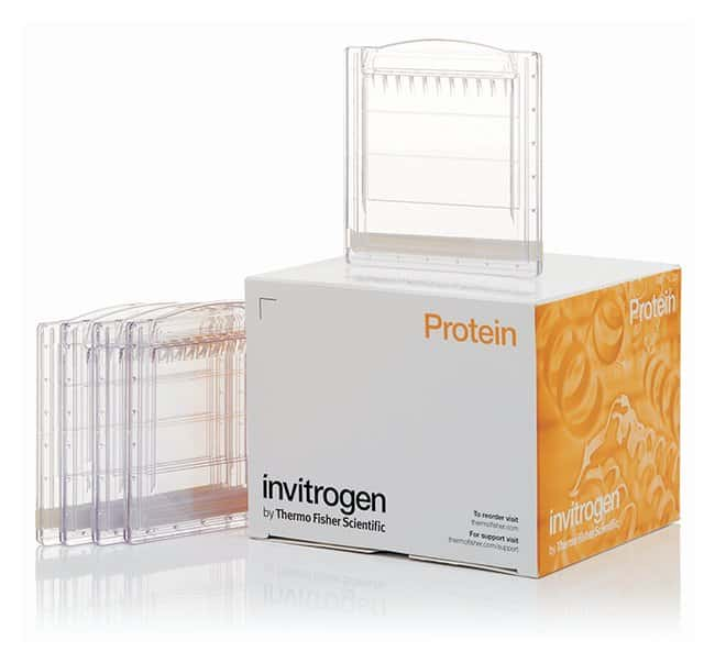 Invitrogen™WedgeWell™ Tris-Glycine Mini Gels 8% Tris-Glycine Gels; 10-well; Box of 10; Up to 60uL per well Products