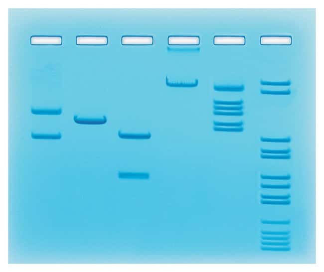 EdvotekAnalysis of Restriction Enzyme Cleavage Patterns of DNA For 8 Gels:Education
