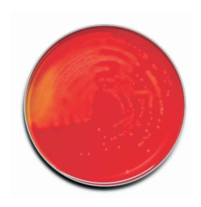 BD BBL™ Prepared Plated Media: Trypticase™ Soy Agar (TSA II™) with Sheep Blood