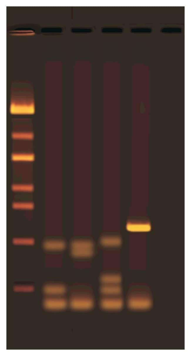 EdvotekExploring Plant Diversity with DNA Barcoding Experiment Kit Exploring