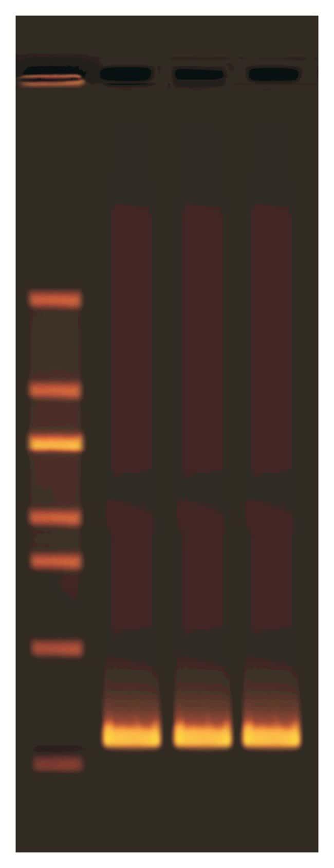 EdvotekExploring the Genetics of Taste: SNP Analysis of the PTC Gene Using